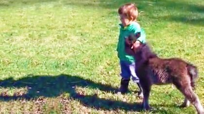 This Little Boy's Friendship With His Mini Horse Will Restore Your Faith In Humanity