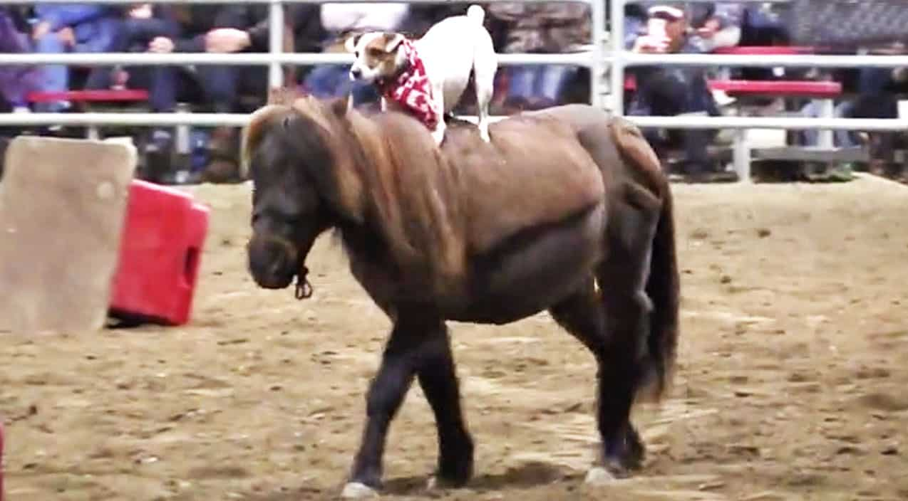 how to become a better horse rider