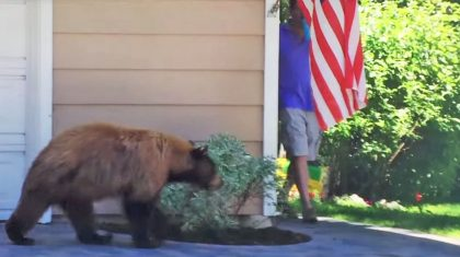 Bear And Man Unexpectedly Meet And Their Reactions Are Hysterical
