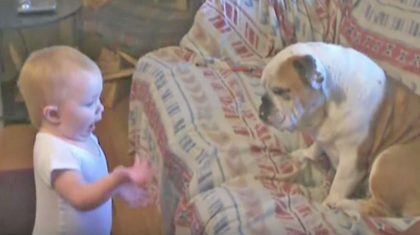 Baby Girl Passionately Argues With Bulldog Bestie