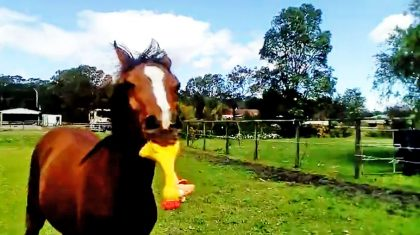 Horse Loses Its Mind When It Finds Squeaky Chicken Toy
