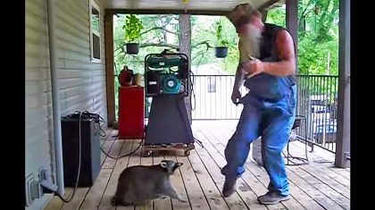 This Country Man Starts Dancing. But When The Raccoon Joins In? Hysterical
