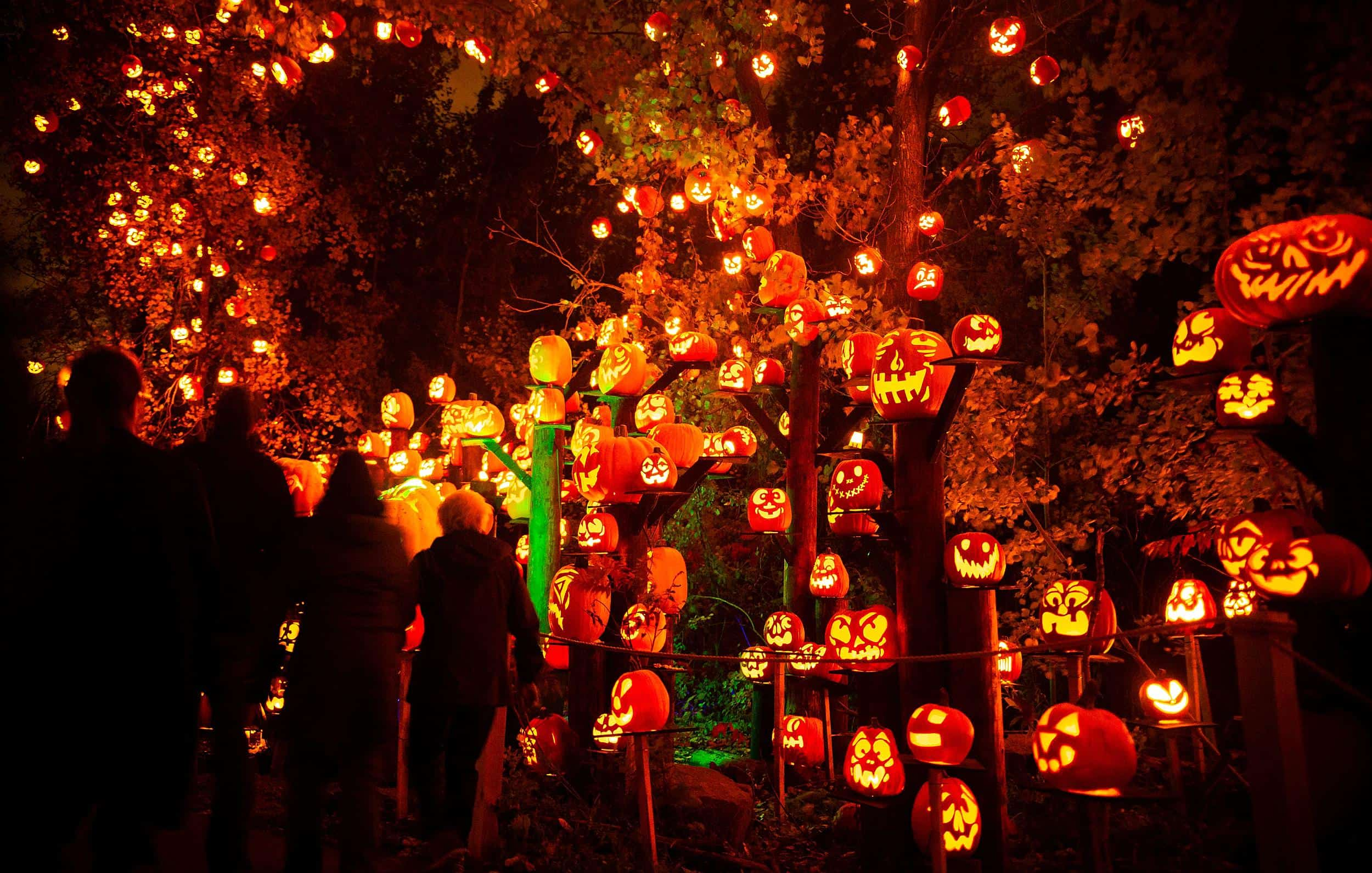 Jack O Lantern Festival Mn Zoo
